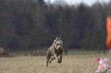 Běh ve volném terénu za střapcem